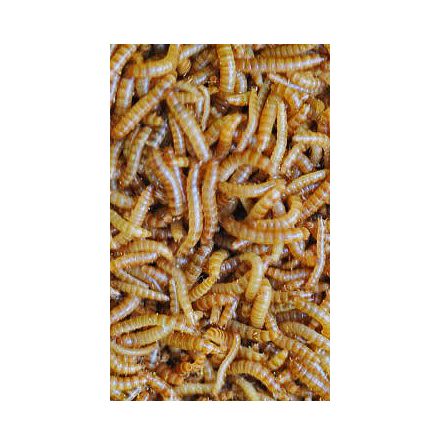 Buffaloworms